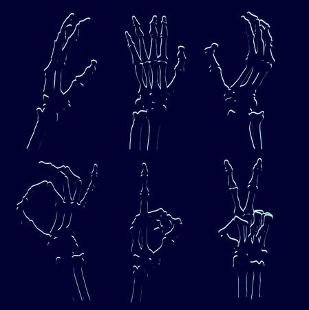 celebrate: set of skeleton hands, vector illustration clip-art Illustration