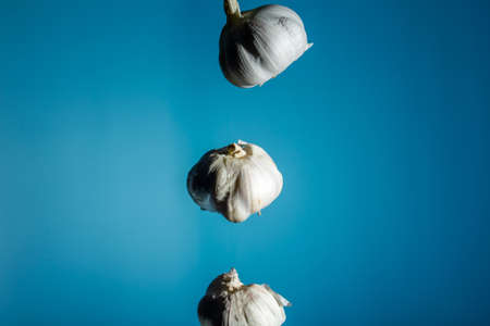 Three heads of garlic are hanging in the air. copy space. on a blue background. close up