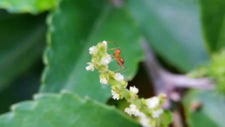 an ant and flowerswith leaf