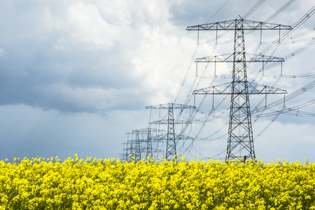 Field with rapeseed and pylons