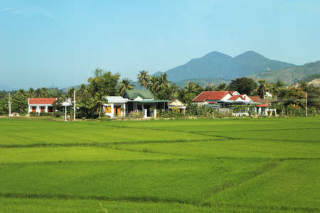 A beautiful rice field view of Vietnam for use in presentations, manuals, design, etc. 免版税图像