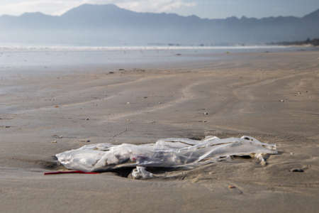 Sea turtle caught in fishing net, Costa Rica, Central America