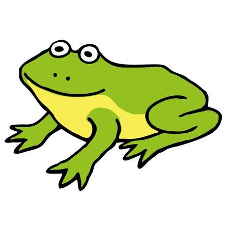 bullfrog: Green frog Illustration