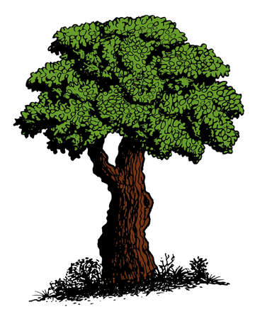 tree crown: Tree illustration Illustration