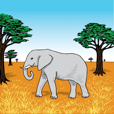 African elephant on savannah Stock Vector - 18319674