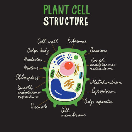 Plant cell structure. Hand drawn infographic poster. Vector. Black background