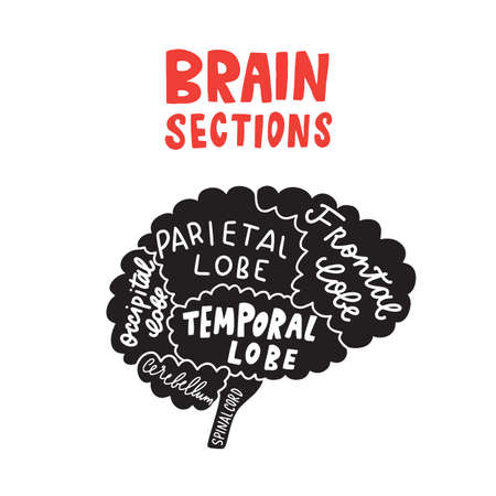 Brain sections. Funny typographic poster. Vector design Illustration