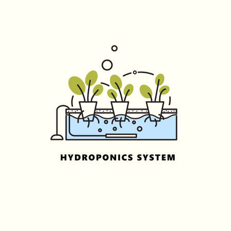 Hydroponics system. Vector illustration in outline style. Home agriculture concept.