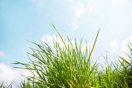 blue green landscape: landscape outdoor green grass detail and blue sky