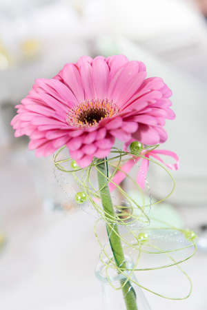 closeup of pink daisy with: closeup pink wedding daisy