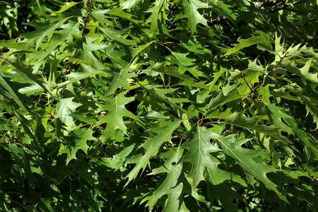 jagged: Green jagged leafs Stock Photo