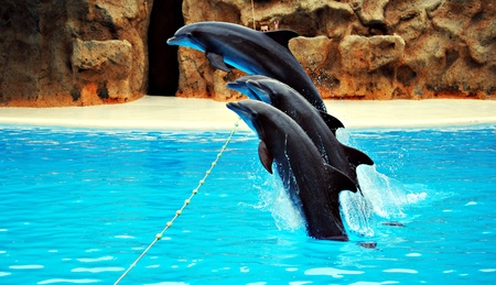 Dolphins jumping in the pool