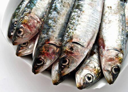 sardine: sardine isolati su sfondo bianco
