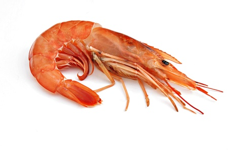 A prawn isoleted on a background
