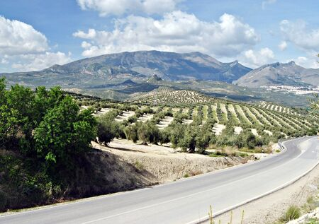 harvesters: Highway in the foreground, behind landscape of olive groves with sky and clouds in the background
