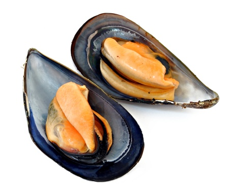 Two mussels next to each other surrounded by white Stock Photo