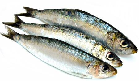 sardine: Tre sardine uno accanto all'altro circondato da sfondo bianco