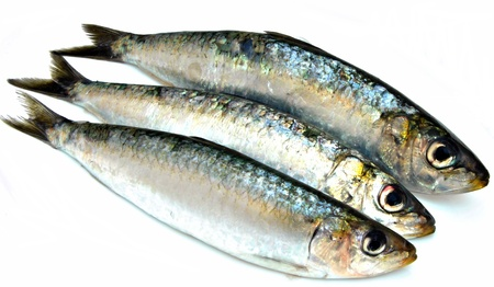 sardinas: Tres sardinas junto a la otra rodeada de fondo blanco