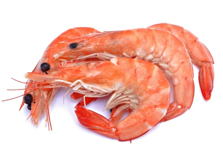 prawns: Several shrimp next to each other surrounded by white background