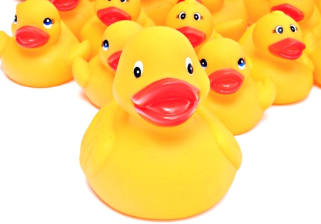 Group of yellow rubber ducks next to each other surrounded by white background photo