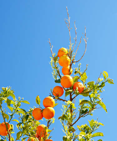 Branches of orange against the blue sky photo