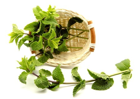 herbalist: Mint leaves in a basket surrounded by white background Stock Photo