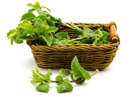 Mint leaves in a basket surrounded by white background Stock Photo - 13993554