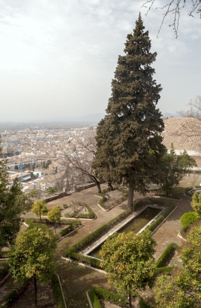 Tree in the garden with the city if Granada in the background photo