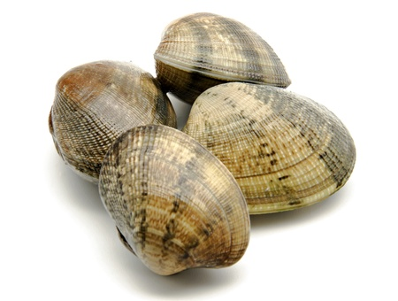 Several clams next to each other surrounded by white background Stock Photo