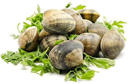 clams: Several clams next to each other with parsley leaves  surrounded by white background