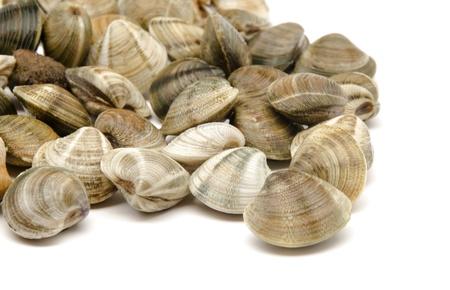 Several fresh clams Banco de Imagens