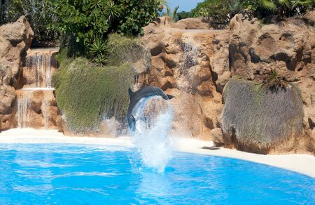 grampus: Dolphins in a pool of water park