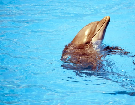 cetacean: Dolphins in a pool