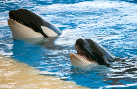 Whales playing in a pool photo