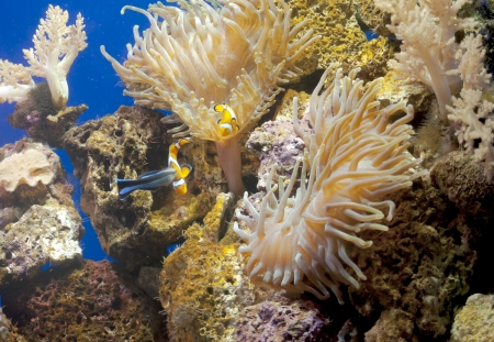 andros: Colorful fish swim alongside each other