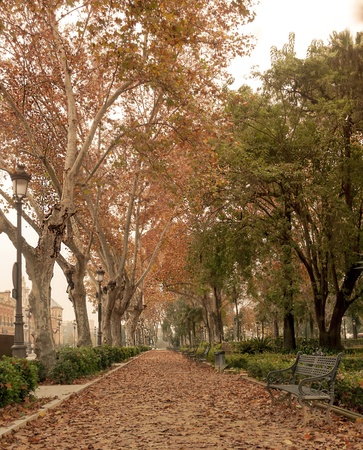 Walk with trees on both sides with dry leaves on the ground in a winter day located in the Spanish city of Seville photo