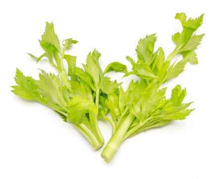 Celery leaves photo