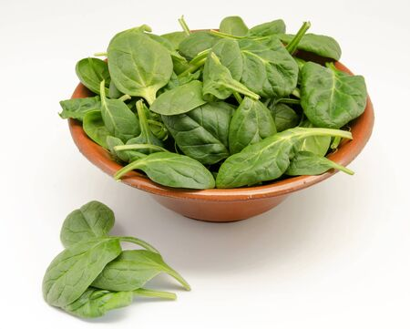 Tender shoots of fresh spinach photo