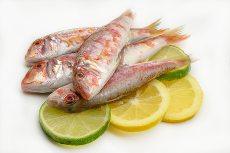 mullet: Fresh red mullet on white background