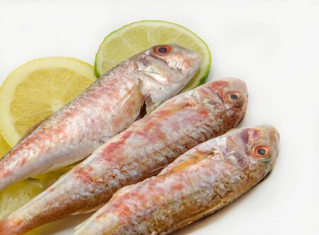 elusive: Fresh red mullet on white background