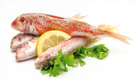 Fresh red mullet on white background photo