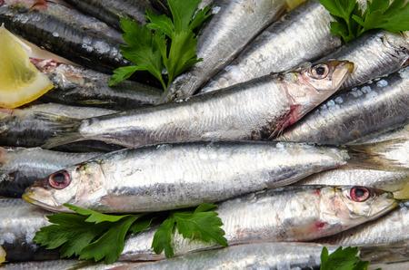sardines: Fresh sardines with parsley and lemon slices Stock Photo