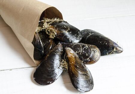 mussels: Mussels in the shell