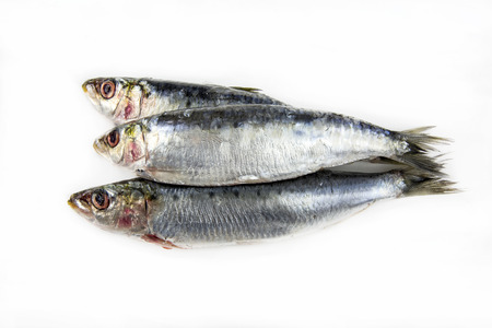 Several fresh sardines on white Stock Photo