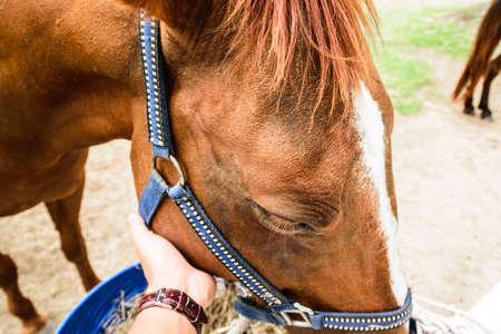 brown horse: Brown horse