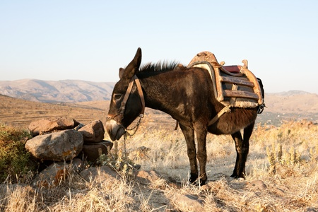 Greek donkey up in the mountains of Lesvos island in mediterranean sea Stok Fotoğraf - 12117150