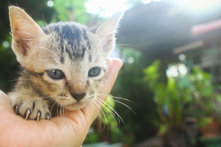 frisky: Portrait lovely  kitten  on the hand of the owner on nature