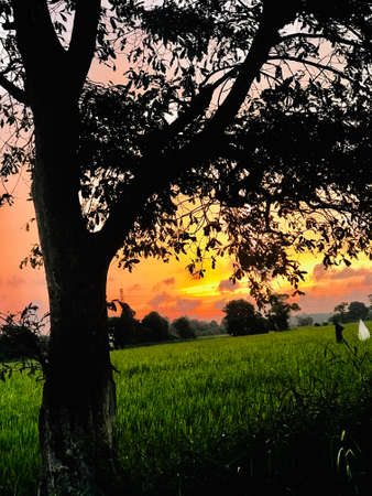 Beautifull sunset movement in sri lanka 2