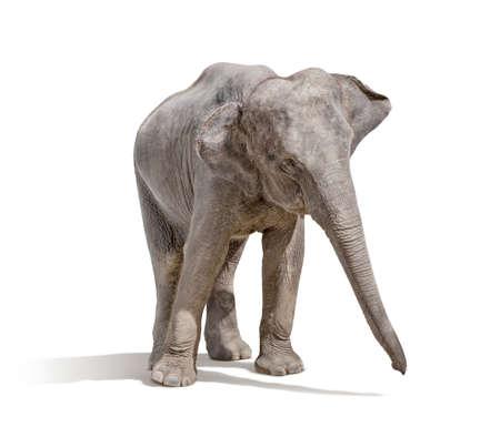 Elefanten isoliert auf weißem Hintergrund mit Clipping-Pfad