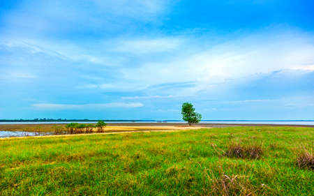 pattani thailand: green grassland and single tree at the shore with bright blue sky, cape of pattani southern Thailand